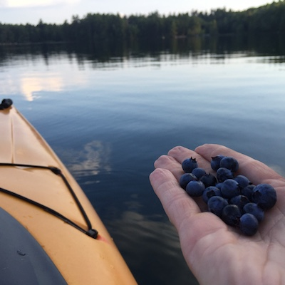 Image of blueberries picked while kayaking