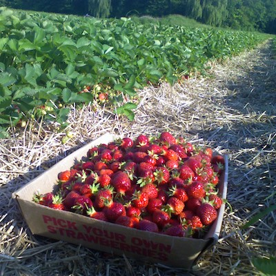 Image of flat of fresh picked strawberries
