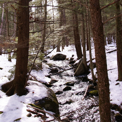 Image from winter trail walking at MacDowell Lake, Peterborough NH